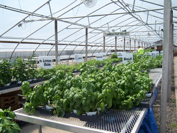 Crops Suitable for Greenhouse Farming